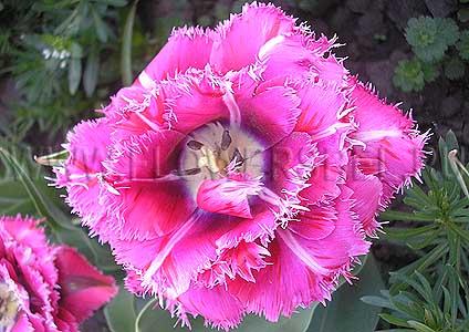 1336de8ac9ef Цветочное хозяйство